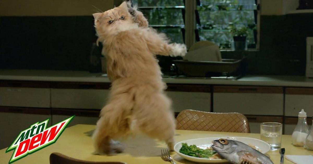Кот станцевал тверк в сюрреалистическом ролике Mountain Dew.