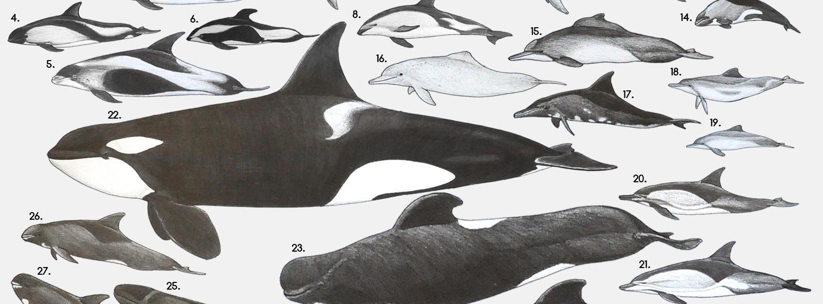 Не будьте китами!
