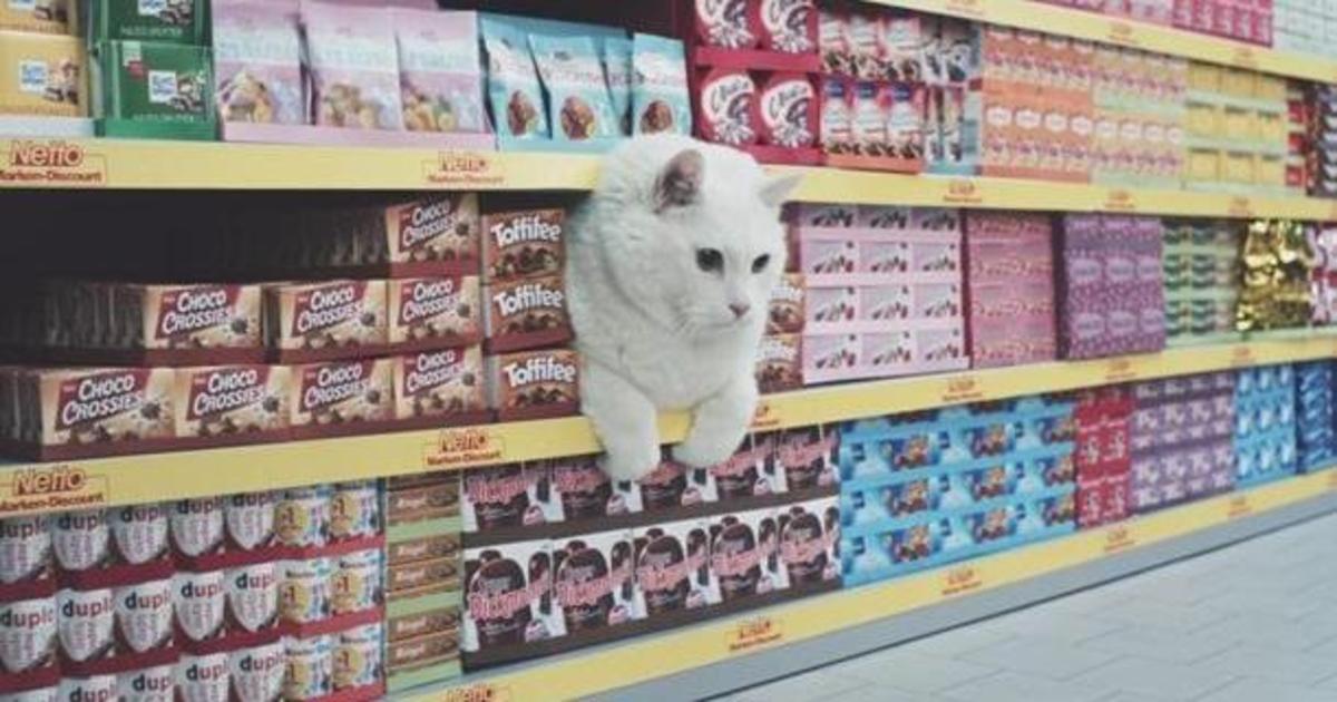 Немецкая реклама с котами в главной роли стала хитом.