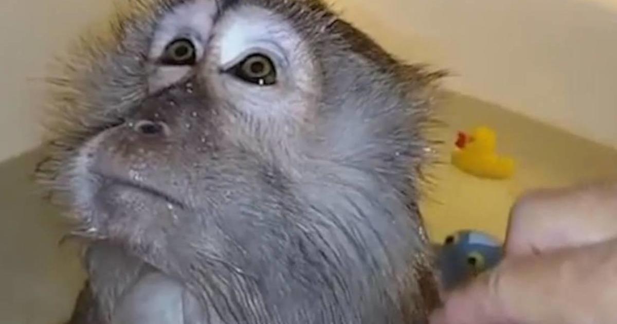 Как расчесывают обезьянку: бренд супов разбавил скучную рекламу мемами.