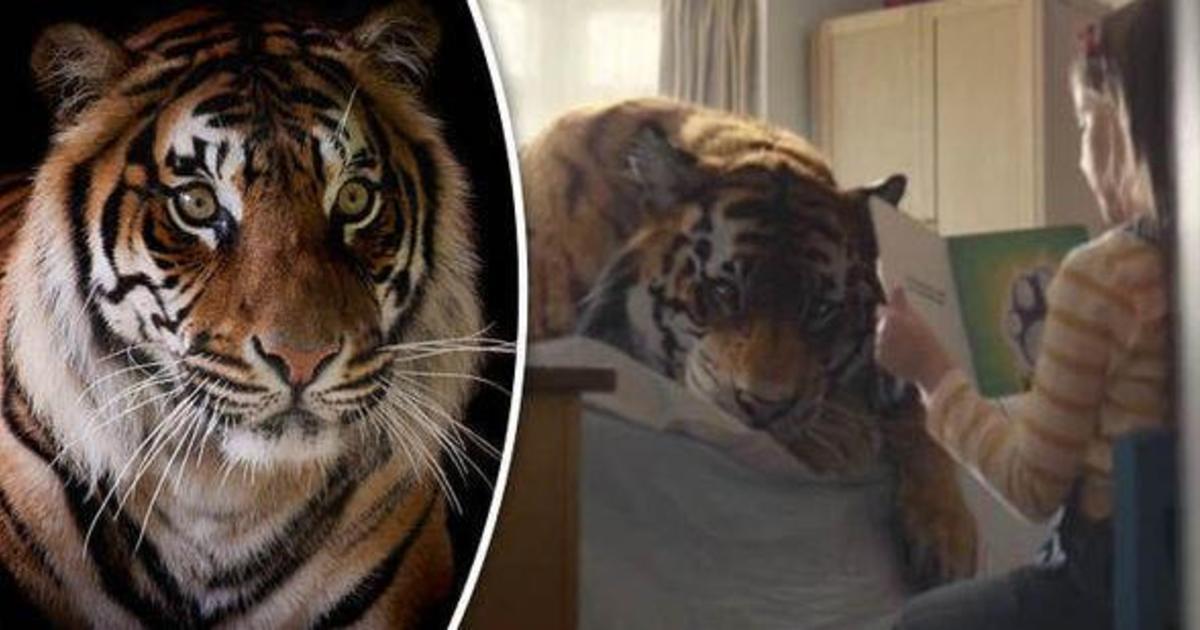WWF выпустил душераздирающий ролик о спасении бенгальских тигров.