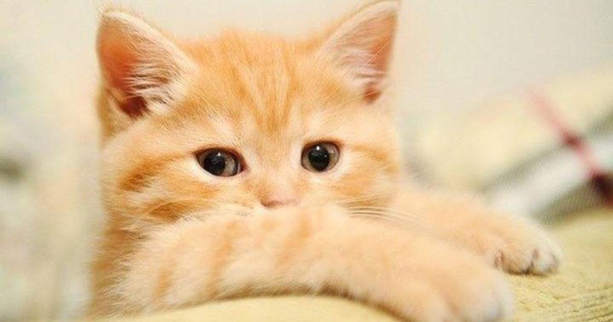 Специальный плагин заменит все публикации о Приватбанке на котиков.