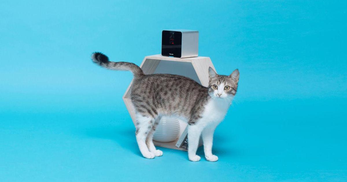 Petcube признано лучшим устройством «умного дома».
