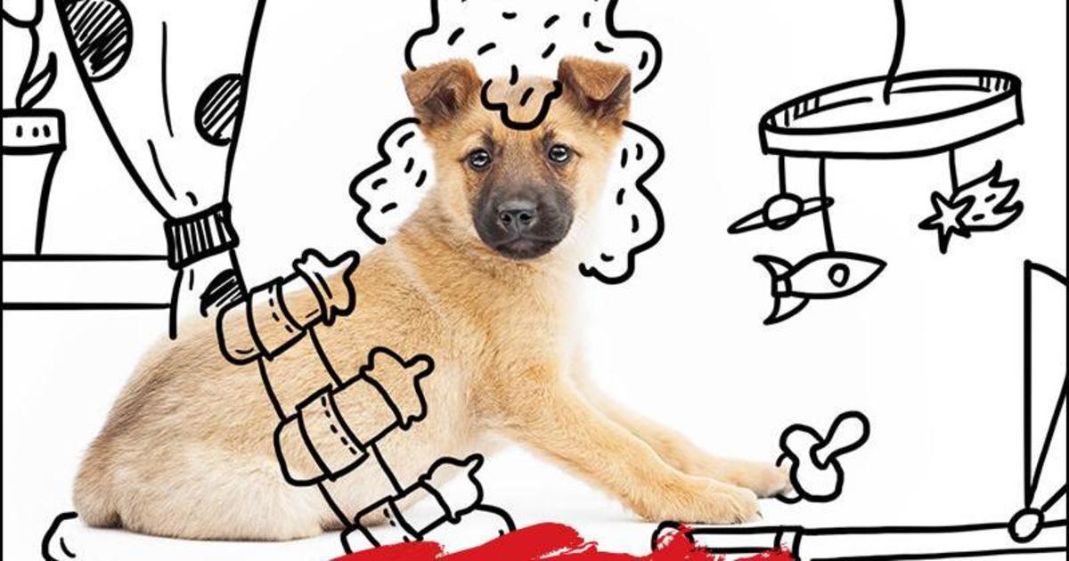 Тренер объятий: соцпроект ищет приют для щенков с помощью HeadHunter.