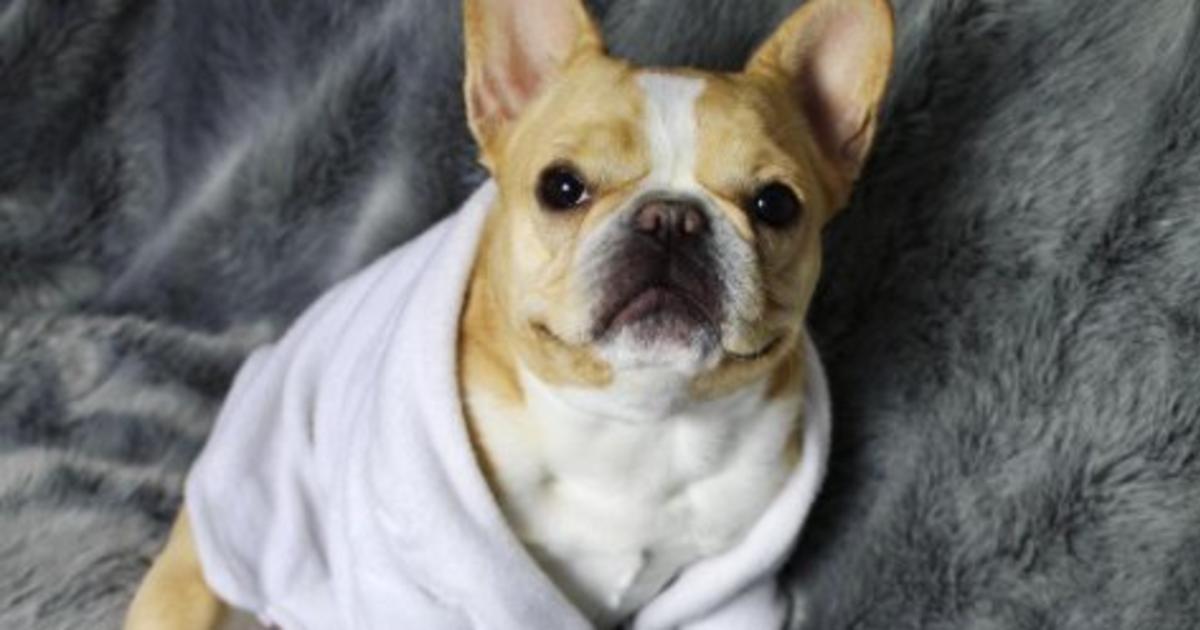 Beauty-бренды платят мохнатым питомцам за рекламу продуктов в Instagram