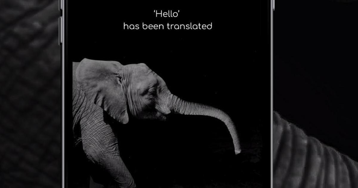 Создан первый в мире переводчик с и на язык слонов.