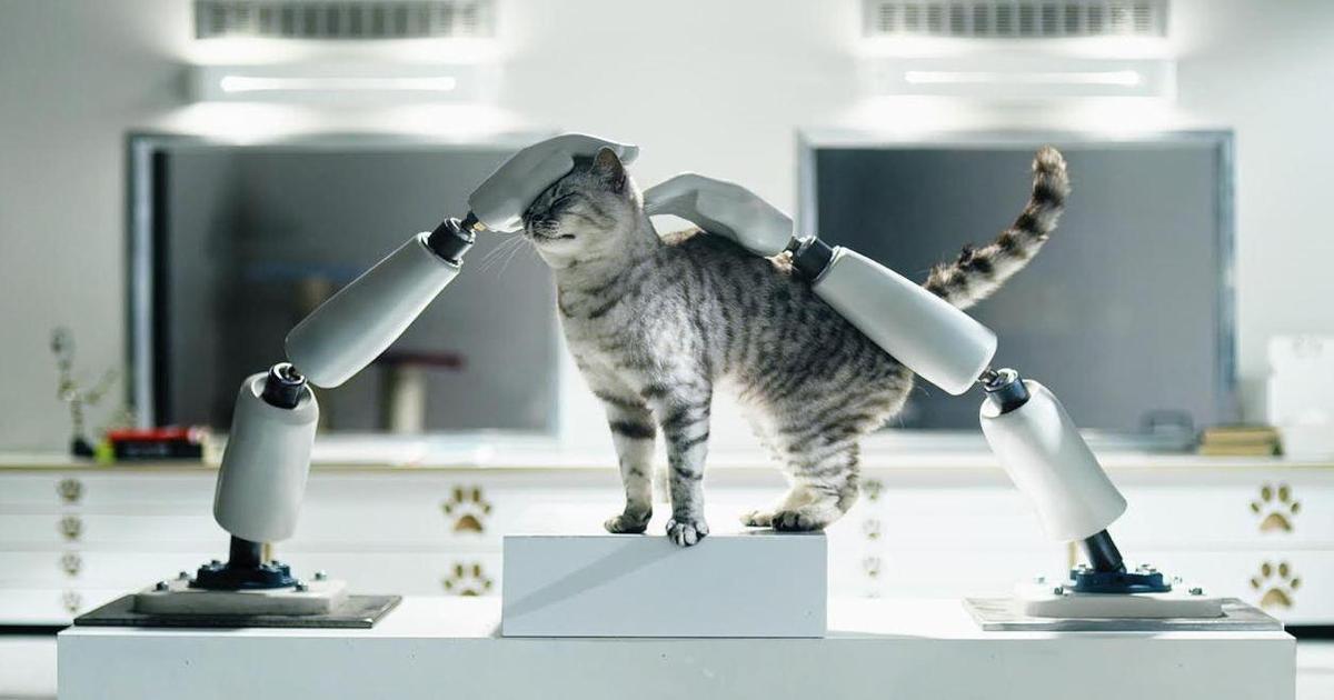 Whiskas открыл Кошачий Институт Технологий, чтобы учить людей.