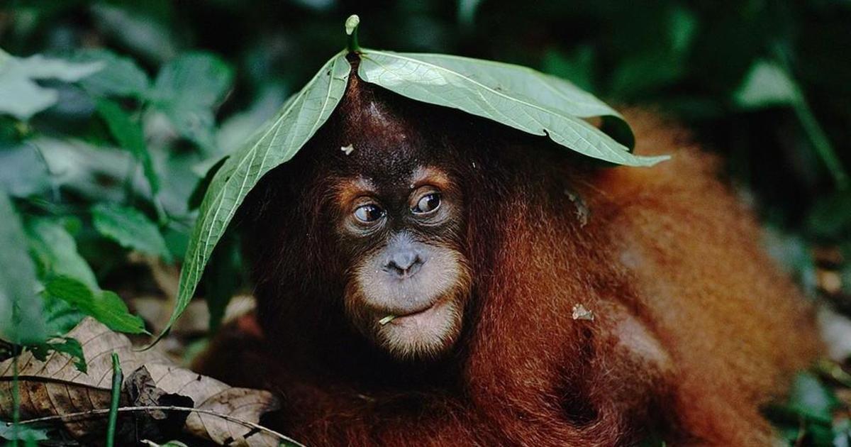 WWF призвало агентства и бренды сделать устойчивое развитие привлекательным