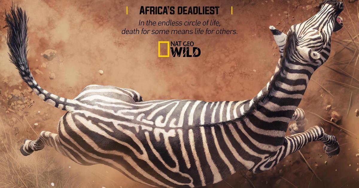 Принты для National Geographic показали нескончаемый круг жизни и смерти.