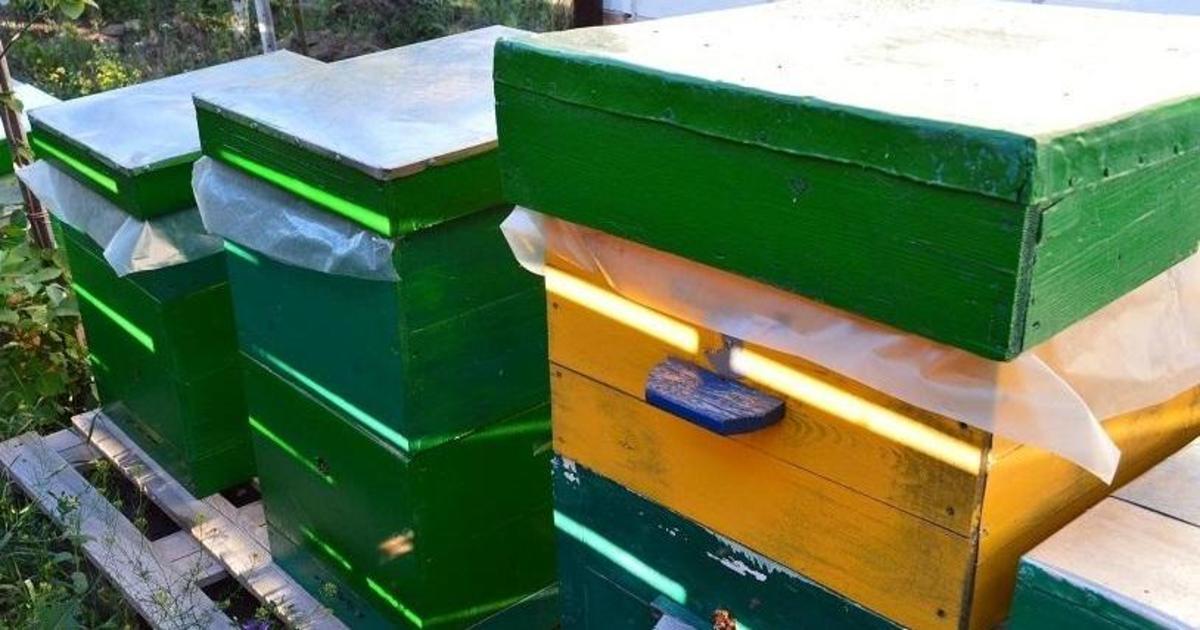 Publicity Creating создали собственную пасеку ради заботы о пчелах.