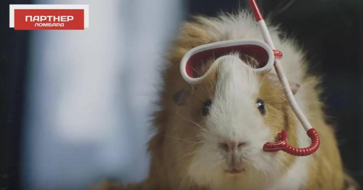 Морская свинка и экзистенциальный кризис в рекламе ломбардов.