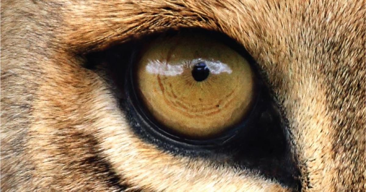 Креативщики прорекламировали подводку для глаз, вдохновившись животными.