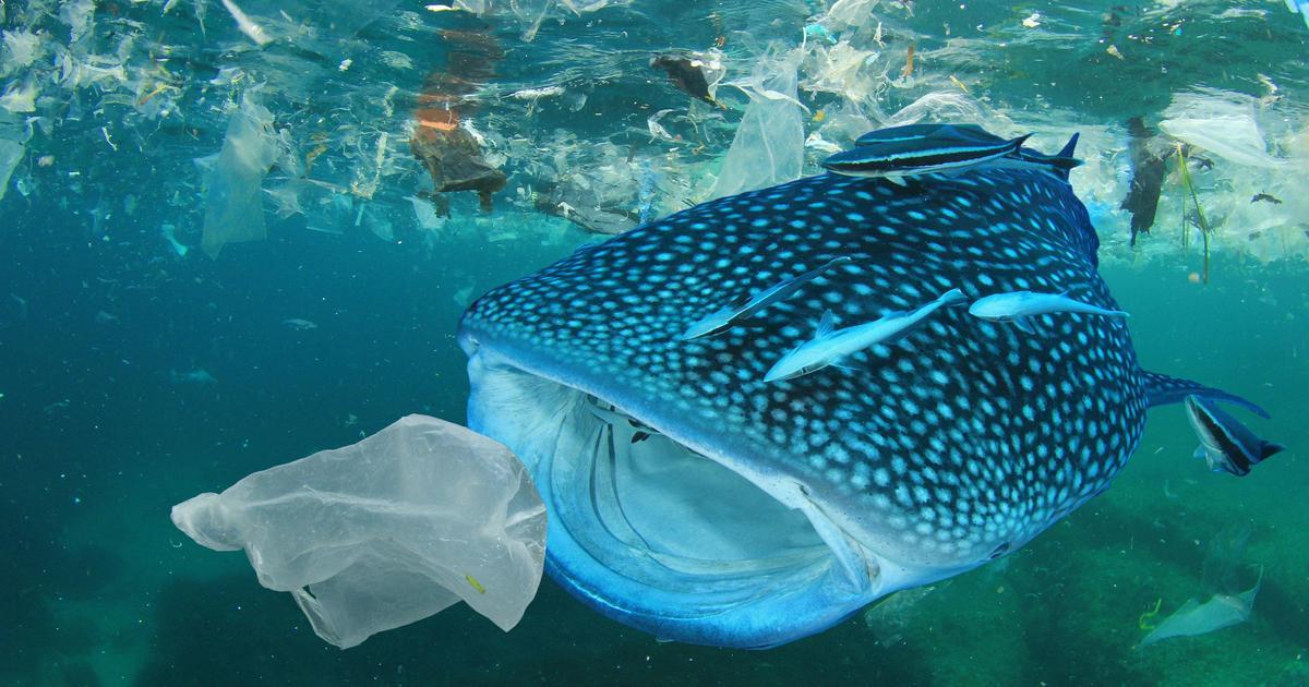 Европарламент проголосовал за запрет одноразовой пластиковой посуды.