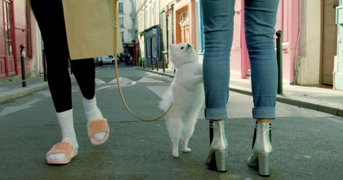 Собаки стесняются обуви своих владельцев в роликах французского бренда.