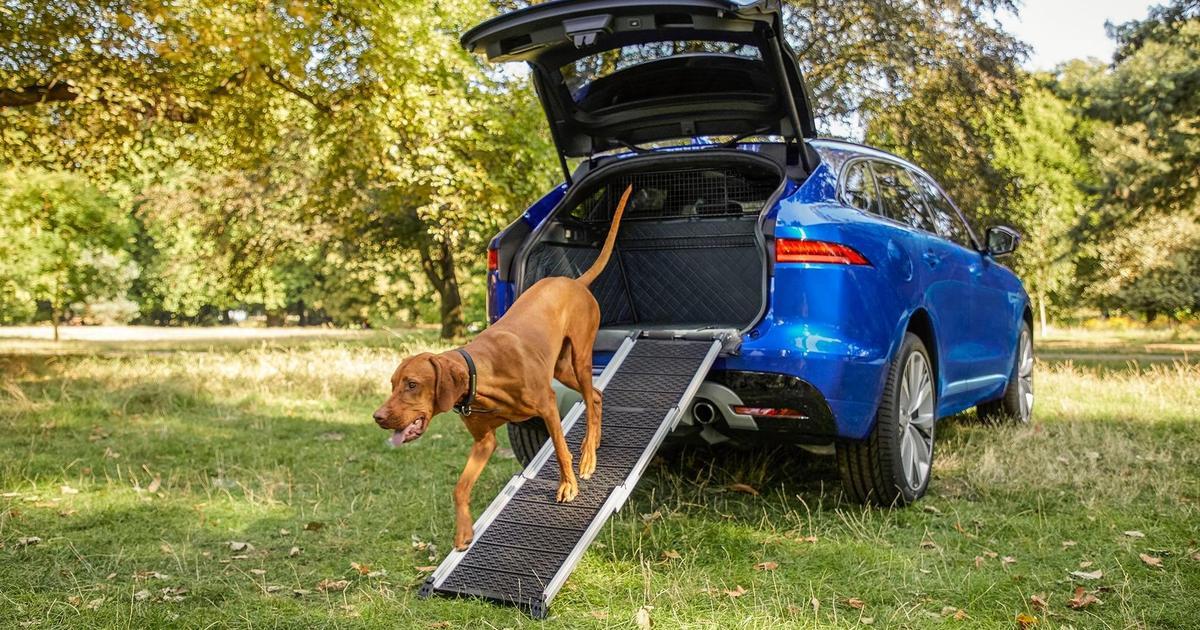Jaguar создал линейку аксессуаров для собак.