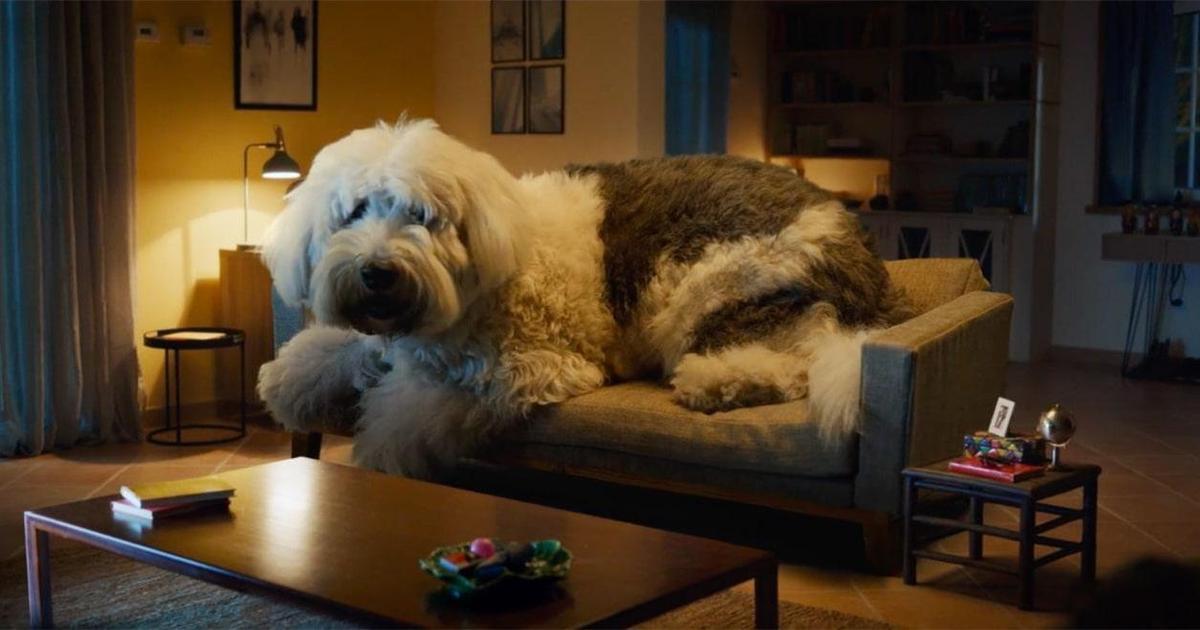 Škoda показала разрушительные последствия отсутствия ремня безопасности для собак.