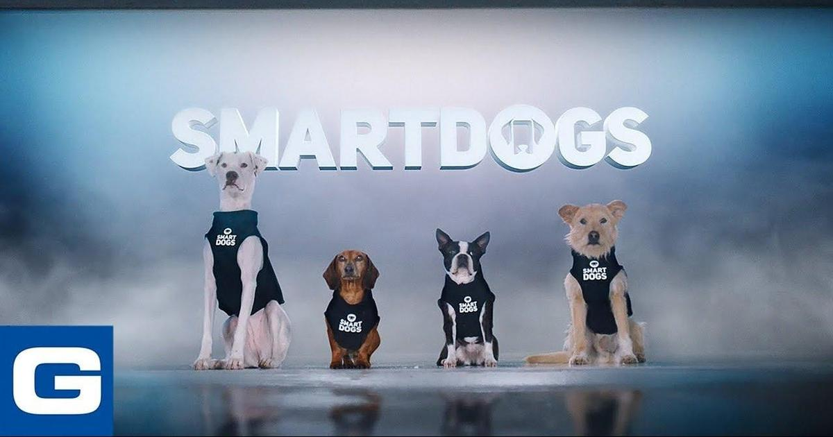 Собаки помогают водителям не отвлекаться за рулем в социальной кампании Geico.