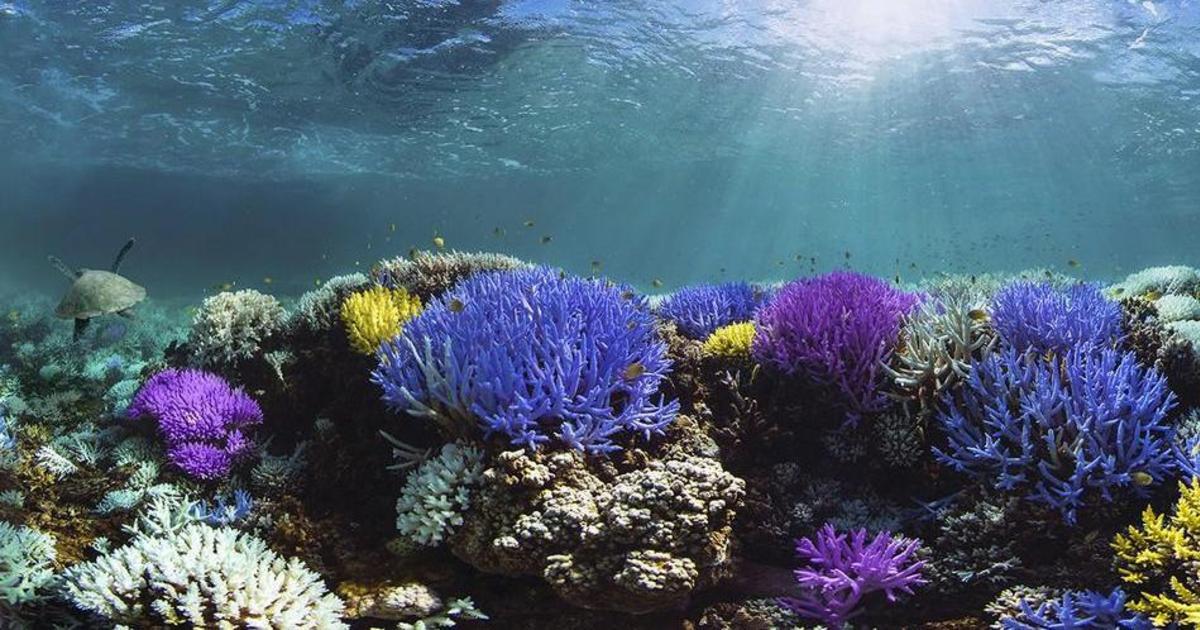Adobe и Pantone запустили кампанию для спасения коралловых рифов