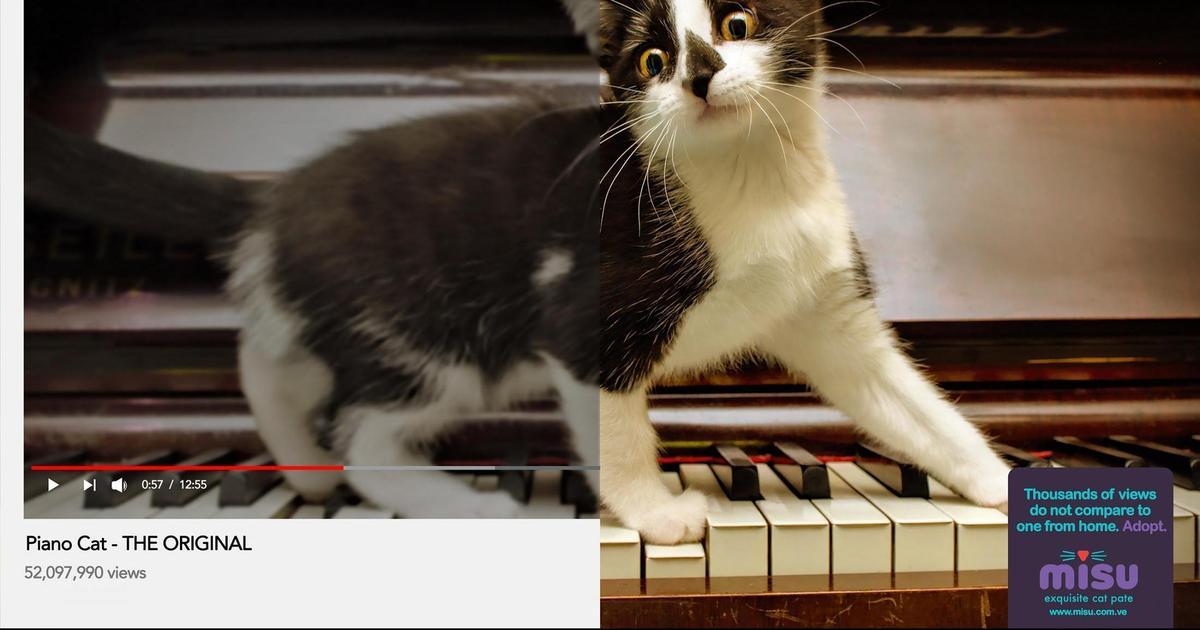 Рекламные принты сравнили YouTube-котов с реальными котами