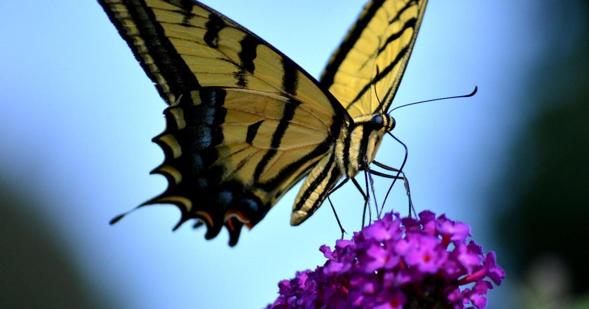 Herbal Essences посадил на билбордах семена, чтобы спасти популяцию бабочек