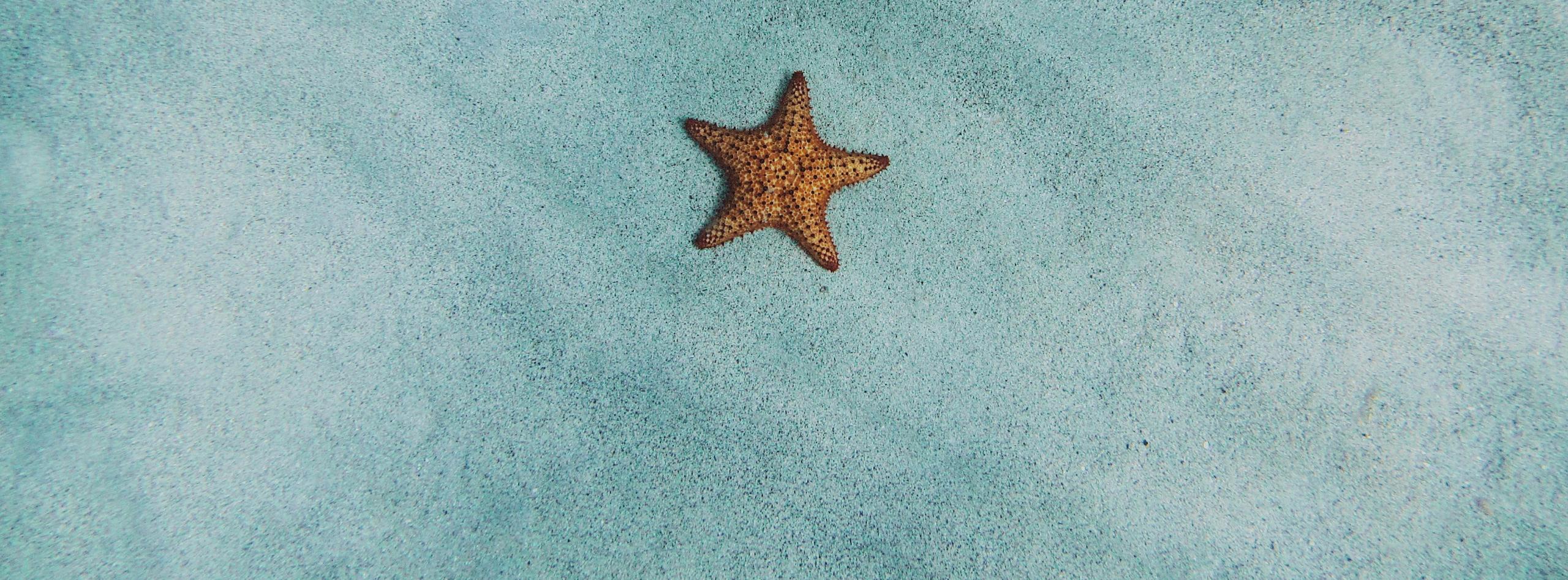 Чистый пломбир, рубашка-одеяло для пикника и ультрафиолетовый ролик: топ-10 летних кампаний