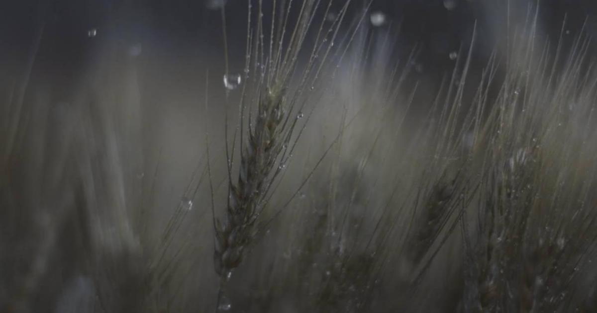 Погоду повернули вспять в рекламе новой программы Syngenta