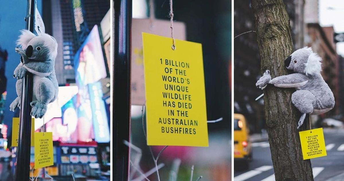 В Нью-Йорке на деревьях появились коалы в рамках благотворительного проекта