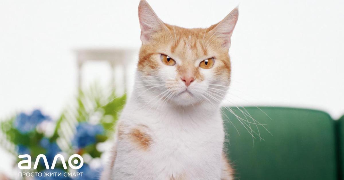 Смартовские коты выступают за новые гаджеты в весеннем ролике АЛЛО