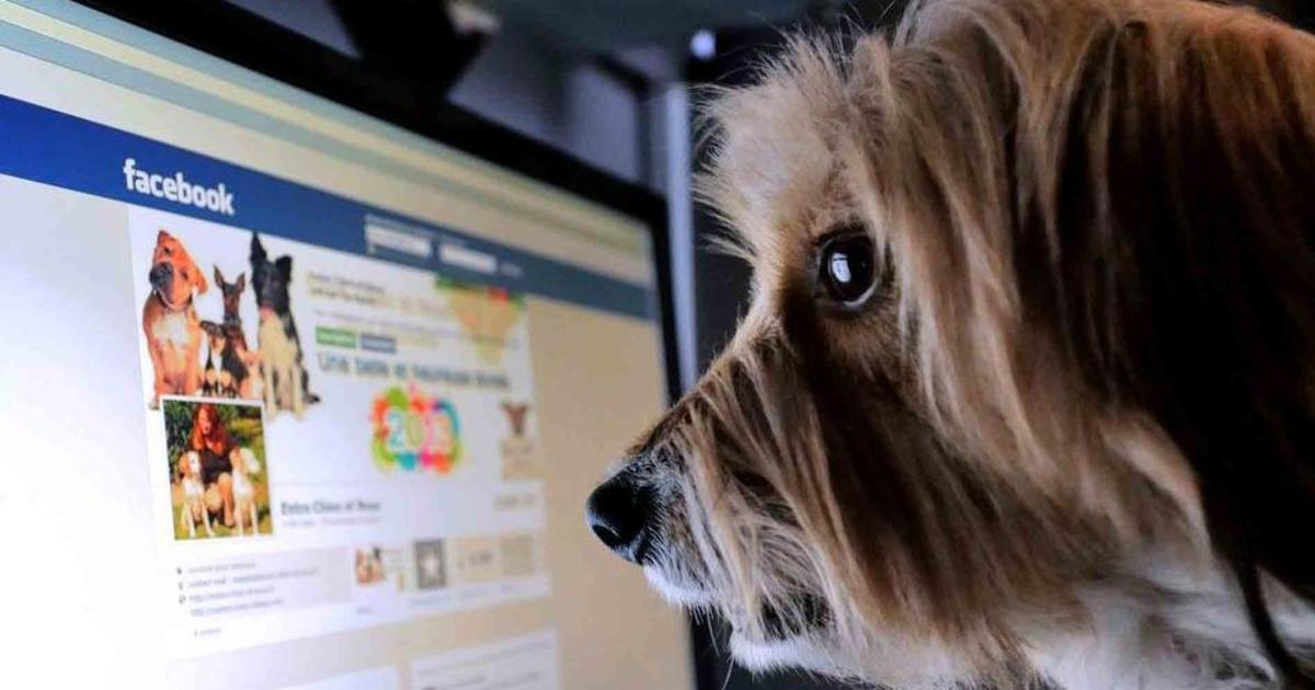 Пользователи активней взаимодействуют со страницами медиа, чем брендов.
