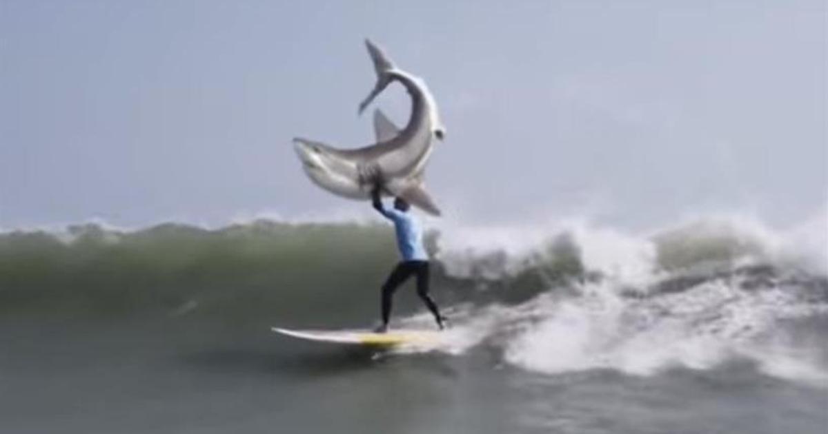 O&M South Africa извинились за «неуважительный» ролик с нападением акулы.