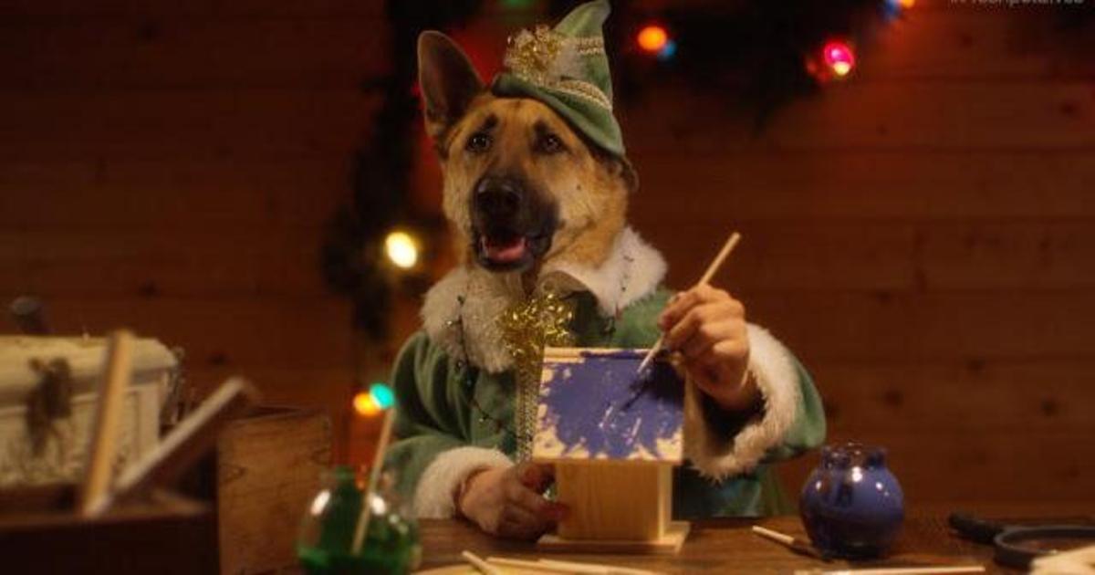 Домашние питомцы снялись в роли эльфов в рождественском ролике Freshpet.