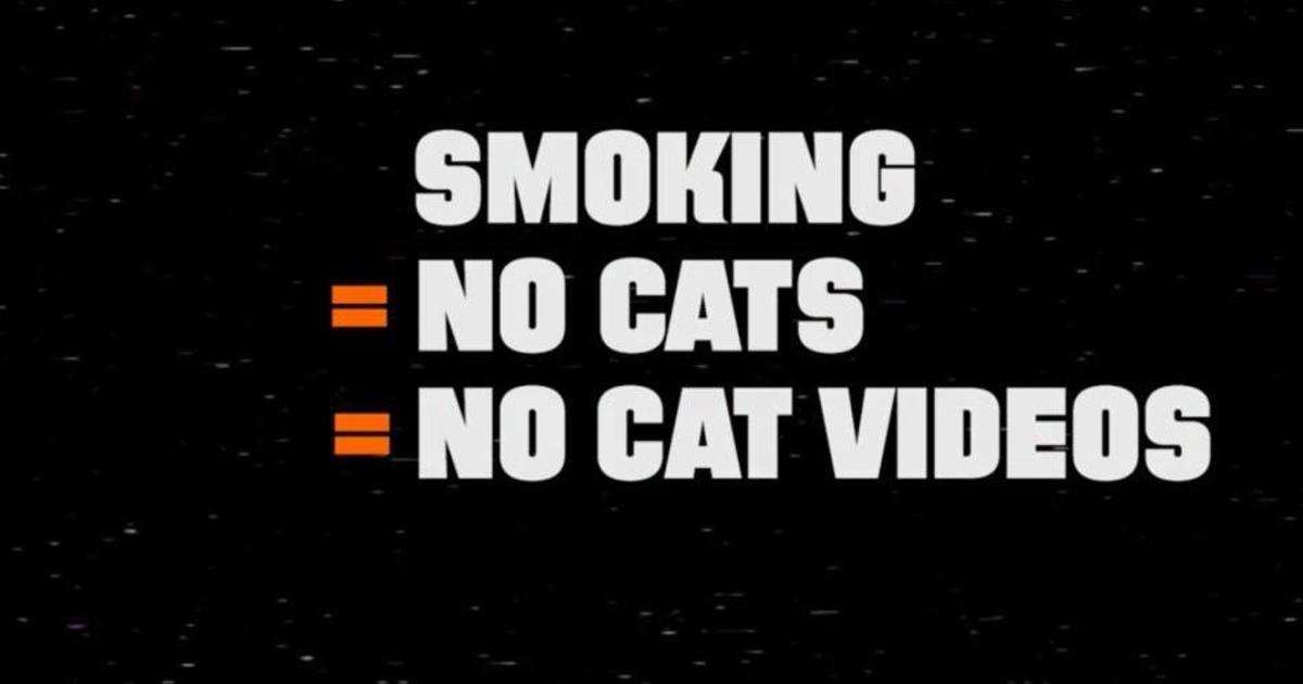 72andSunny напугали роликом об исчезновении котиков из интернета.