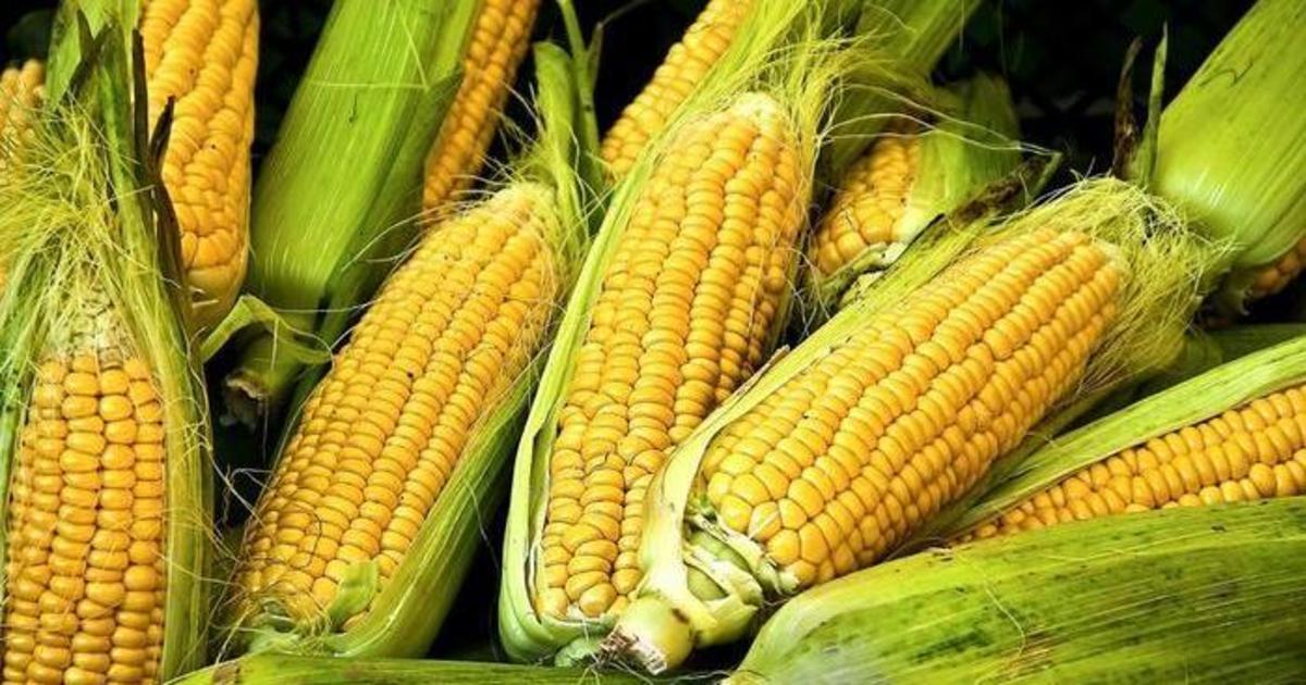 PornHub превратился в сайт о кукурузе.
