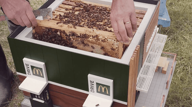 Швеции открылся McDonald's для пчел 2