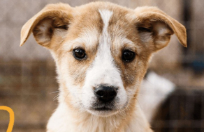 Приют для животных «Сириус» призвал украинцев найти дом для питомцев