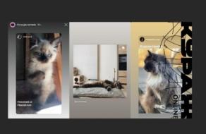 «Кураж» шукає кота, який стане обличчям спільного з monobank благодійного проєкту