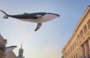 Видео с китами в Киеве собрало миллион просмотров за неделю