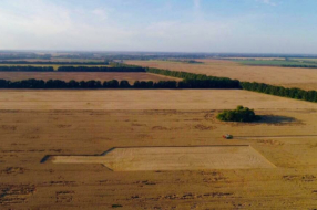 На пшеничному полі під Києвом з'явилася гігантська фігура