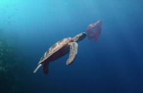 Морган Фримен озвучил социальный ролик о новых видах в океане