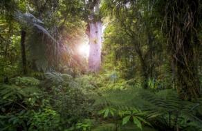 Новая Зеландия приглашает конвертировать разочарования годом в деревья