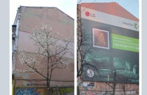 Как LG Electronics Ukraine отреагировала на ситуацию со спиленной магнолией