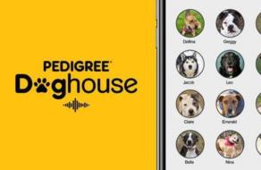 Pedigree использовал Clubhouse, чтобы найти питомцам дом