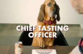 Производитель пива для собак ищет четвероногого директора по вкусу на зарплату $20 тыс.
