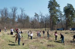 Компания UGEARS присоединилась к экоинициативе Greening of the planet и высадила 5,5 млн деревьев