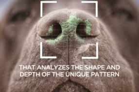 Креативщики создали приложение, которое находит потерянных питомцев по носу