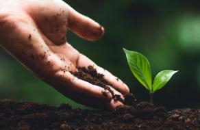 UKRSIBBANK BNP Paribas Group обеспечит высадку 75 тысяч деревьев
