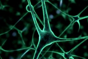 Нейромаркетинговые лаборатории и нейрошопы: топ-тренды в нейромаркетинге