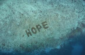 Зачем SHEBA® выращивает собственный коралловый риф