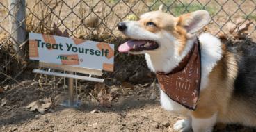 Бренд корма для животных уставил билборды высотой с питомца
