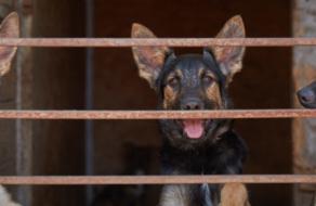 Фокстрот зняв зворушливий корпоративний ролик до Дня захисту безпритульних тварин